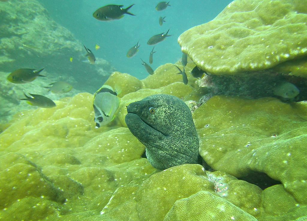 Isla Caño – Tauchen in Costa Rica: Muräne