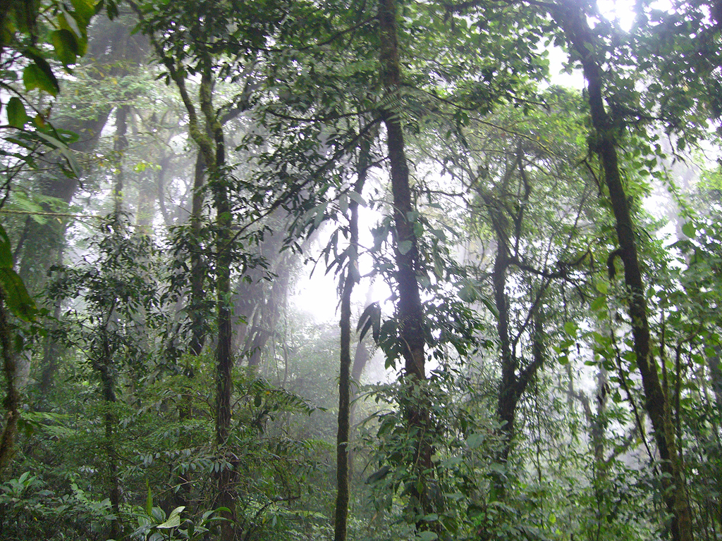 Private Guides: Ruhe genießen – Costa Rica Rundreise