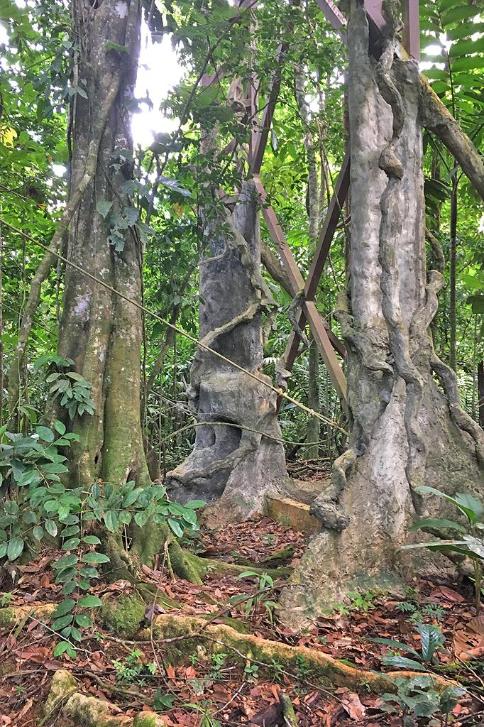 Boca Tapada Tiefregenwald Maquenque