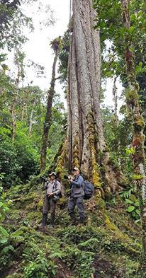 Trekking Las Tablas – Baumriese