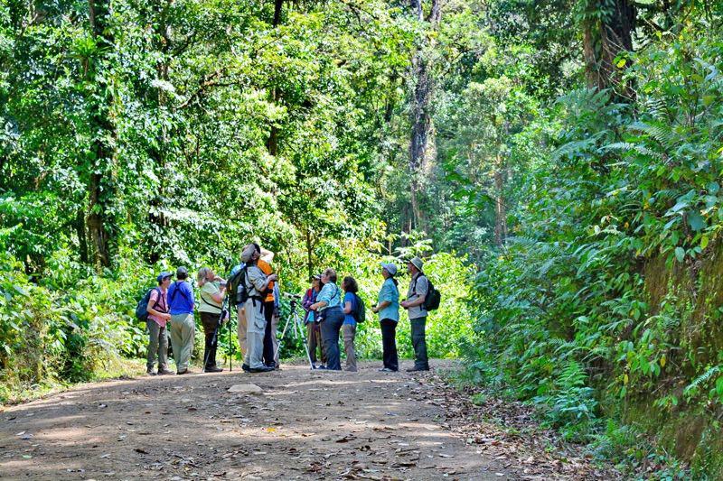Trekking Las Tablas – Vogelbeobachtung in Costa Rica