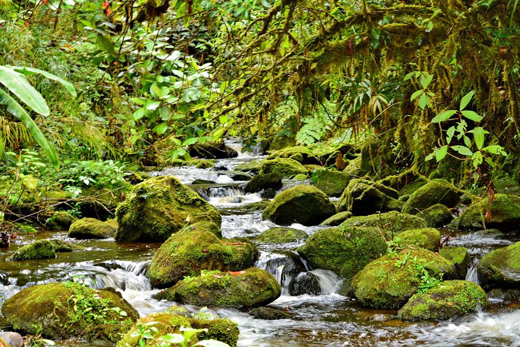 Trekking Las Tablas – Flusslandschaft