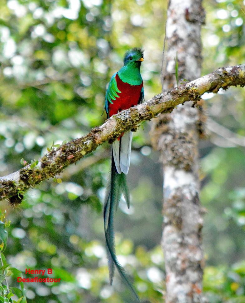 Trekking Las Tablas – Quetzal