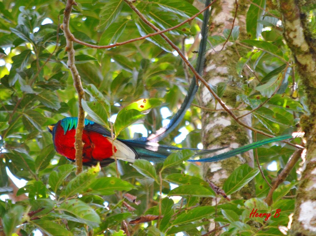 Trekking Las Tablas – Quetzal, Vogelbeobachtung