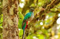Trekking Las Tablas - Quetzalvogel