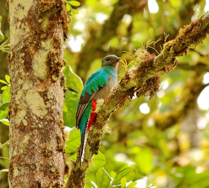 Trekking Las Tablas – Quetzalvogel