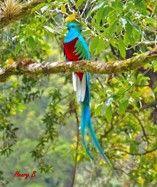 Trekking Las Tablas – majestätischer Quetzal