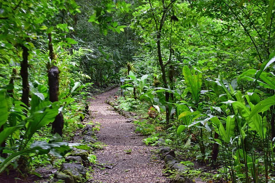 nationalpark-monte-alto-costa-rica-02