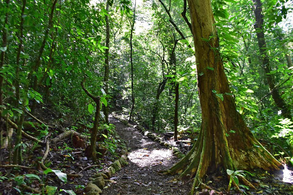nationalpark-monte-alto-costa-rica-04