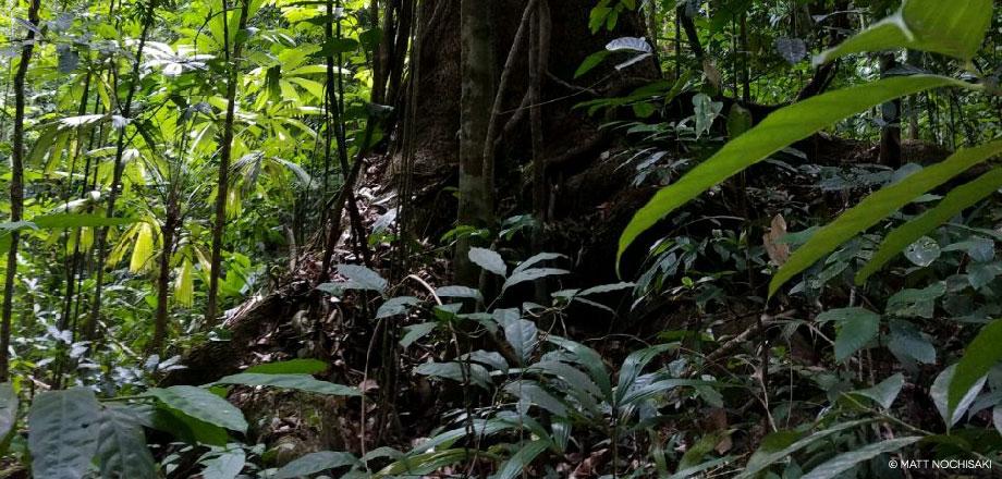 La Tarde – Dschungel | Costa Rica
