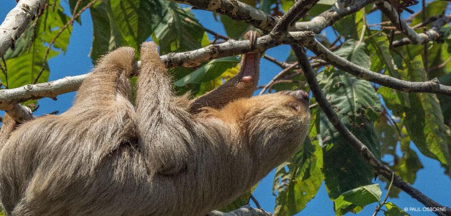 La Tarde – Faultier | Costa Rica