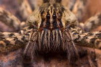 La Tarde - Spinne | Costa Rica