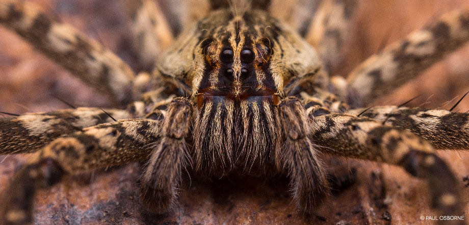 La Tarde – Spinne | Costa Rica