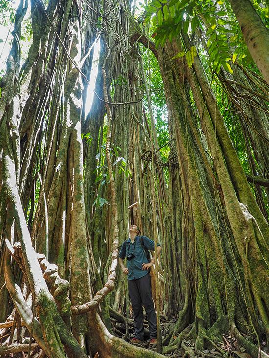 La Tarde – Urwaldriese | Costa Rica