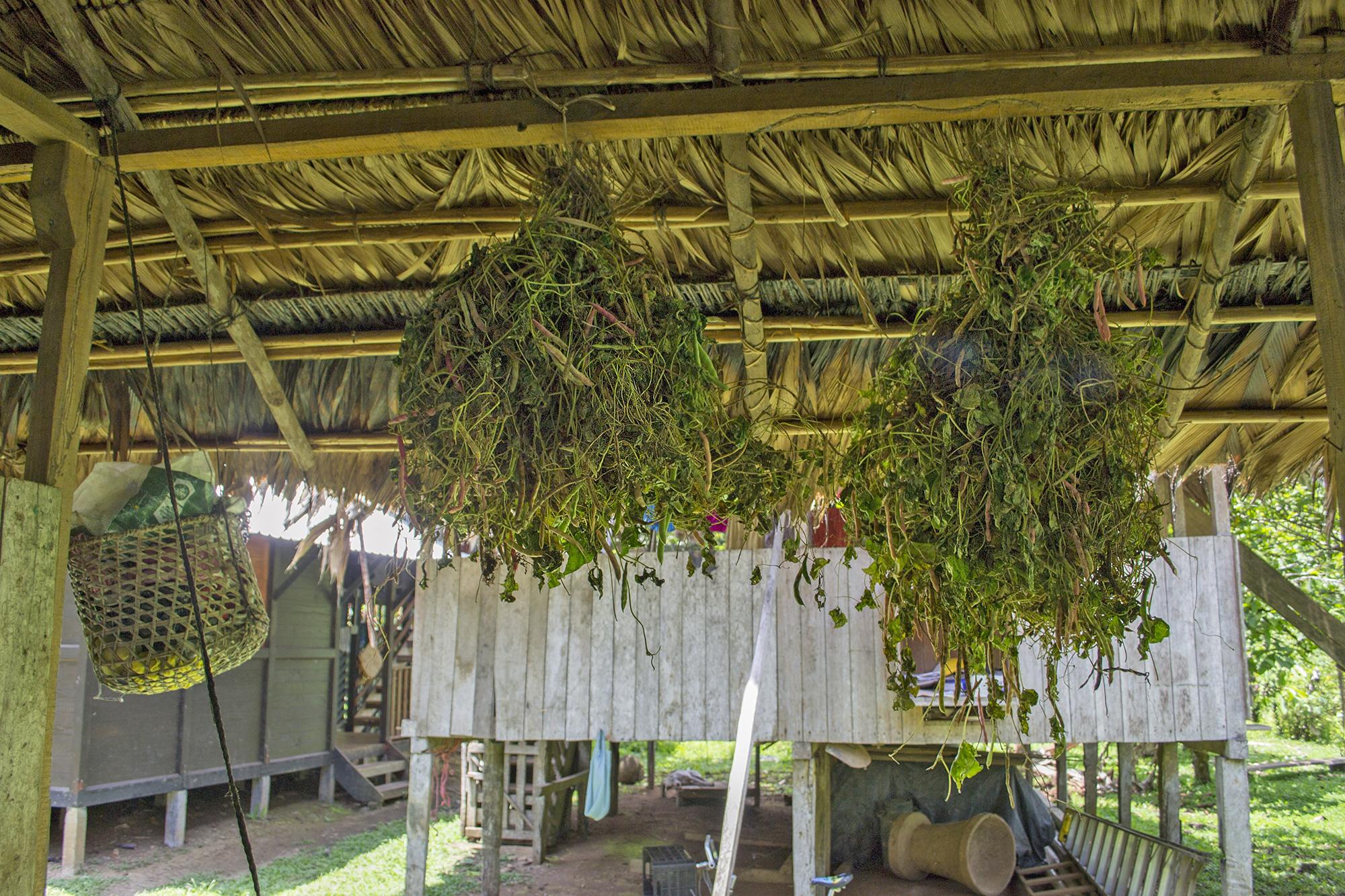 Durupe – Heilpflanzen ATEC
