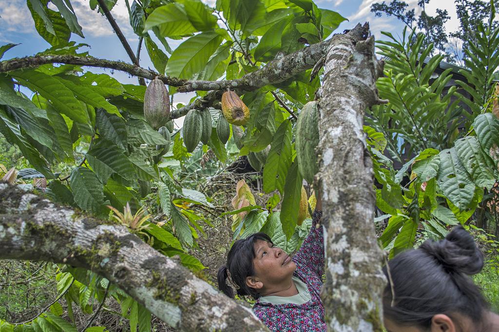 Durupe – Kakao Frucht ATEC