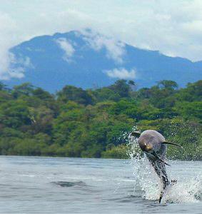 Manzanillo – Delfine ATEC