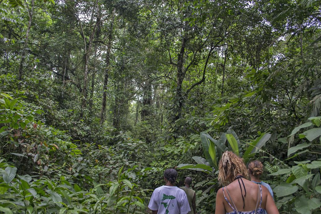Veronicas Place -Jungle Trek (2) ATEC