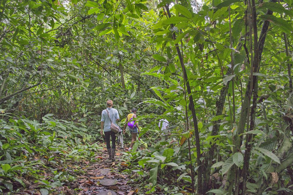 Veronicas Place – Jungle Trek ATEC