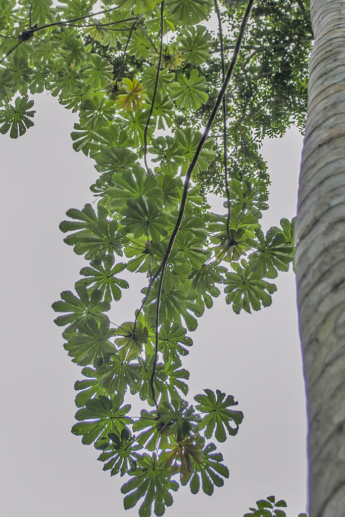 Veronicas Place -Medizinische Pflanzen (1) ATEC