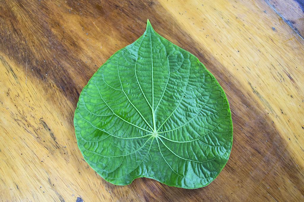 Veronicas Place -Medizinische Pflanzen (6) ATEC