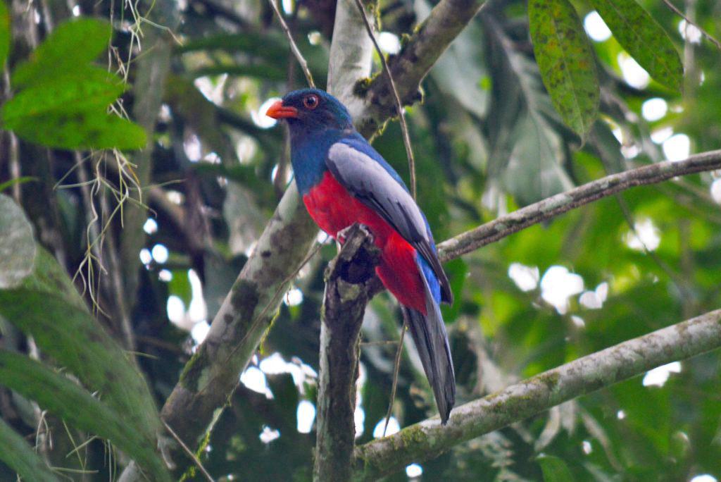 Birding Tour – Manzanillo ATEC