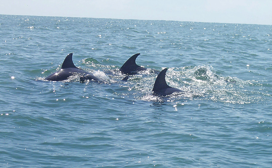 Delfin Tour Manzanillo – Delfine ATEC