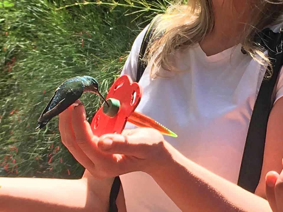 Kolibris – anfüttern mit Zuckerwasser