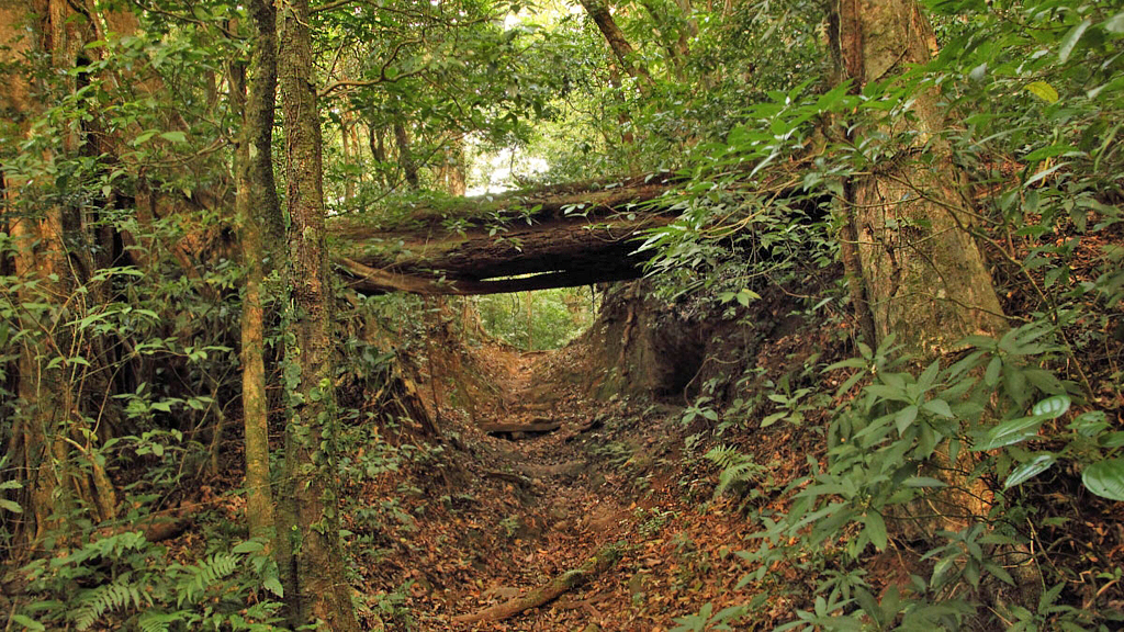 Vulkan Cacao – Trockenwald Landschaft