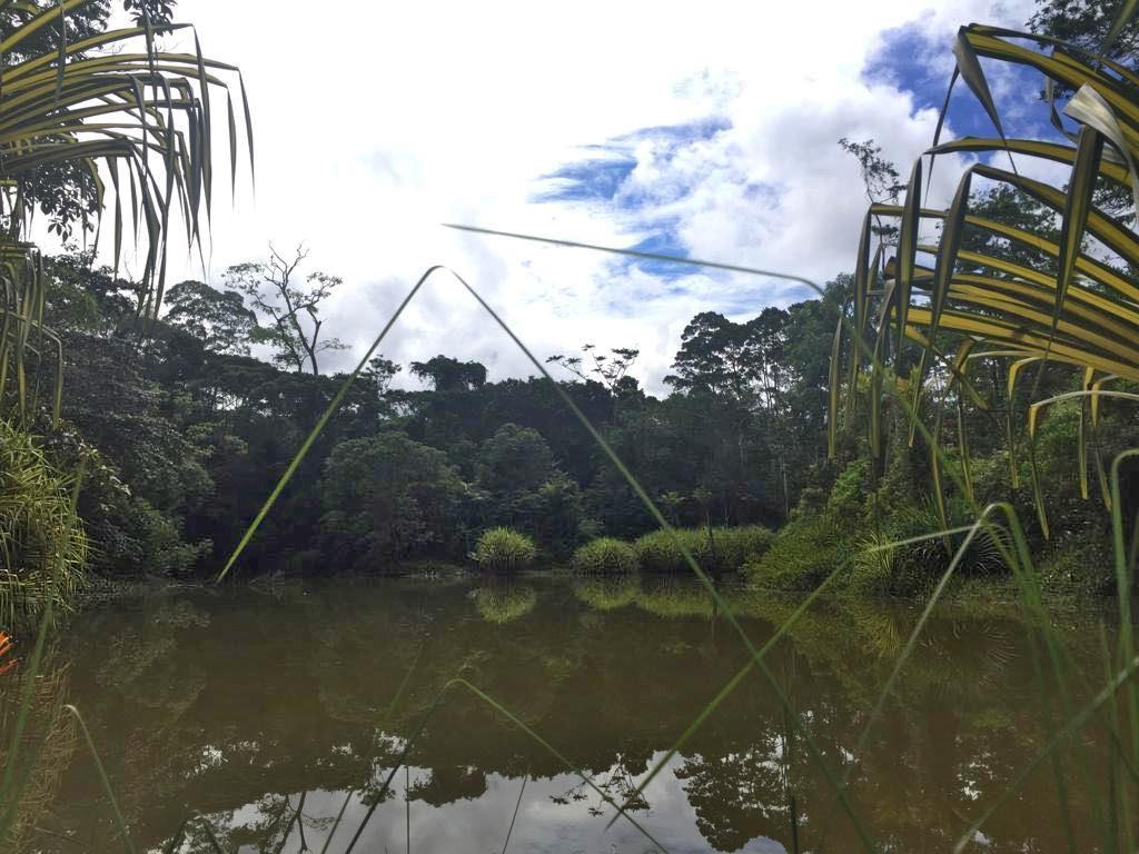 Boca Tapada – Tiefregenwald Lagune