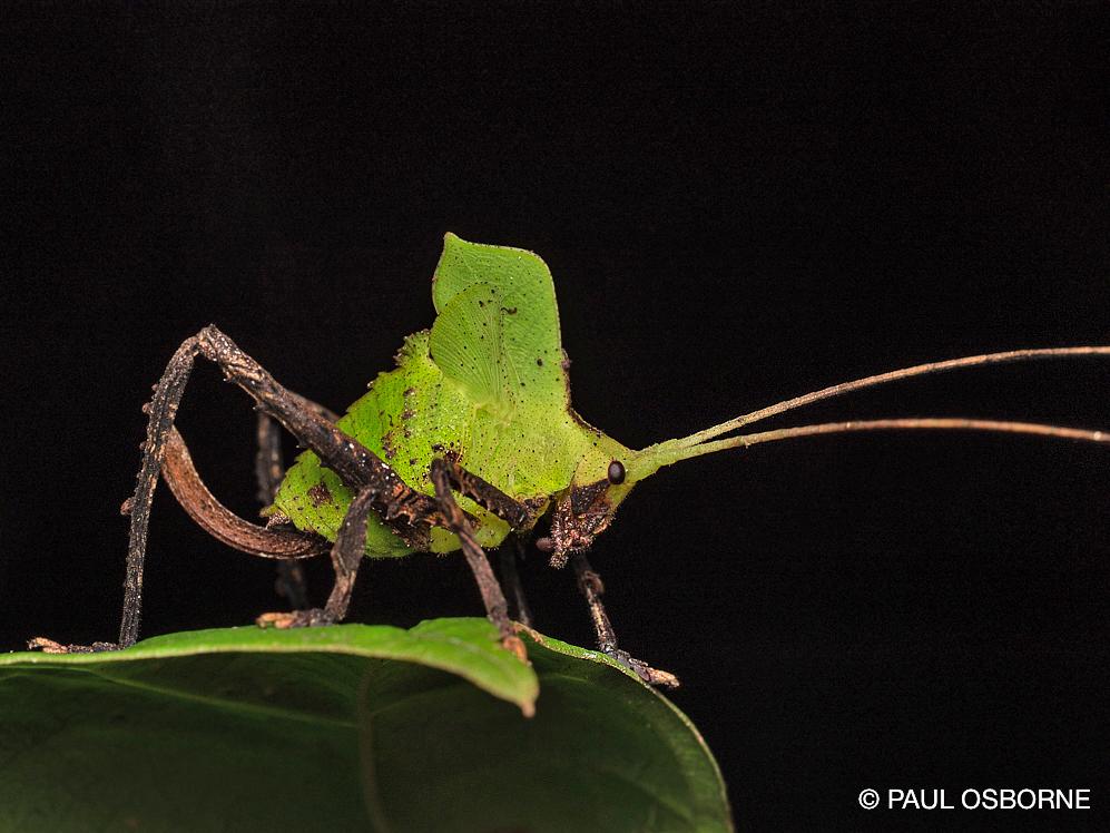 La Tarde – Insekten