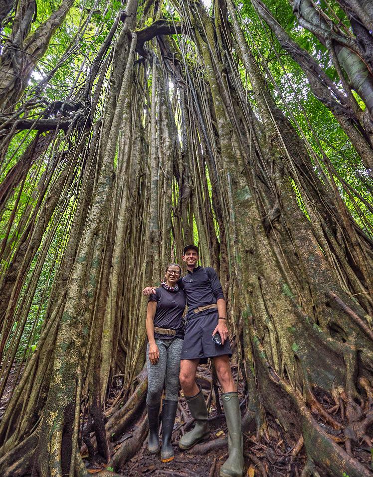 La Tarde – Reservat Bäume Luftwurzeln