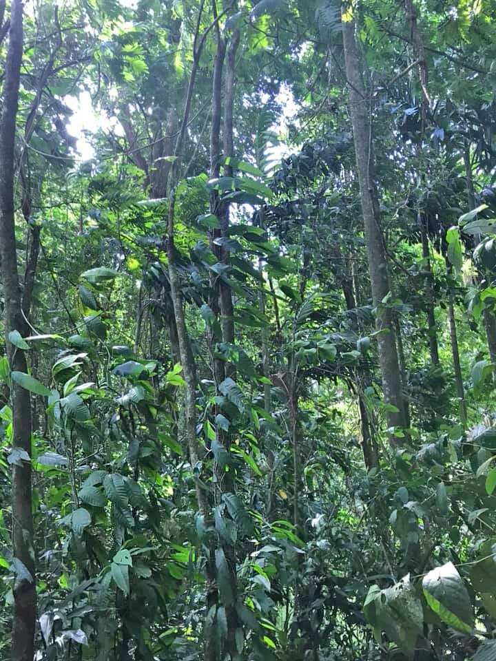 Don Belicio – Regenwald Schutzgebiet