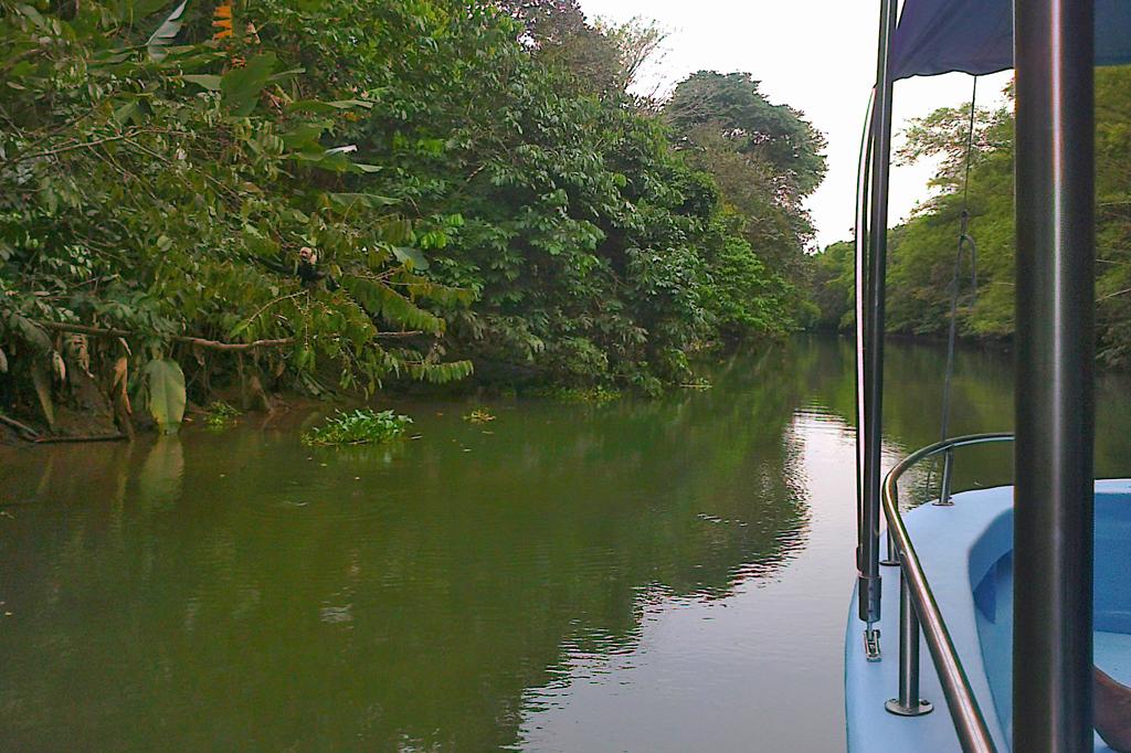 Mangroven Tour_Río Sierpe (Foto Christine)