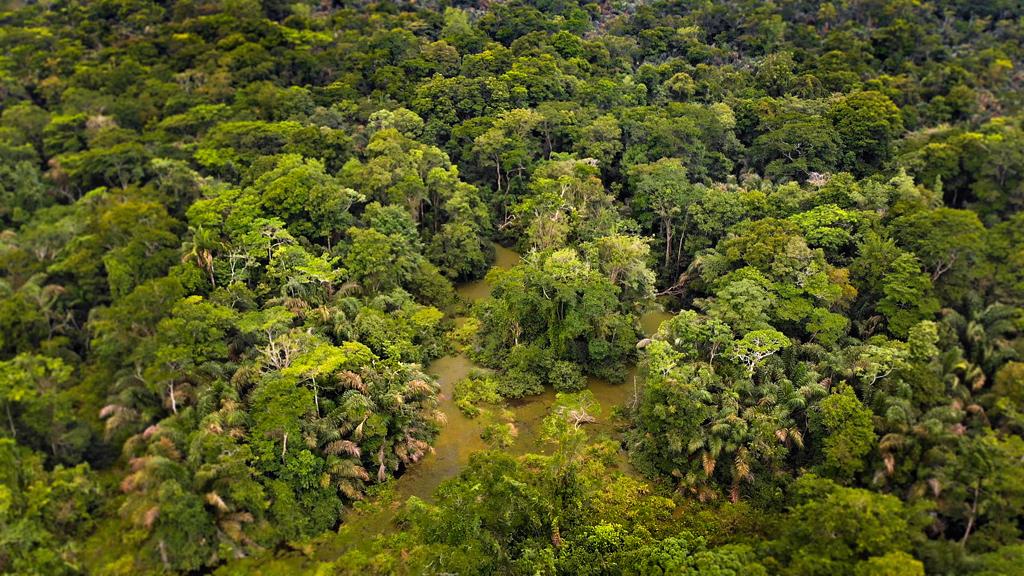 Pacuare Reserve – Agami Heron Sanctuary
