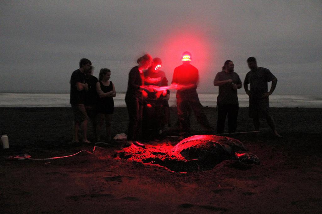 Pacuare Reserve – Meeresschildkroeten Nachttour
