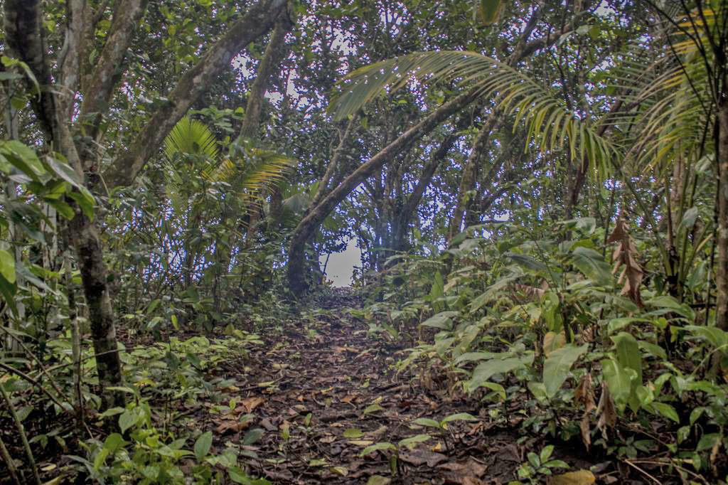 Pacuare Reserve – Trails