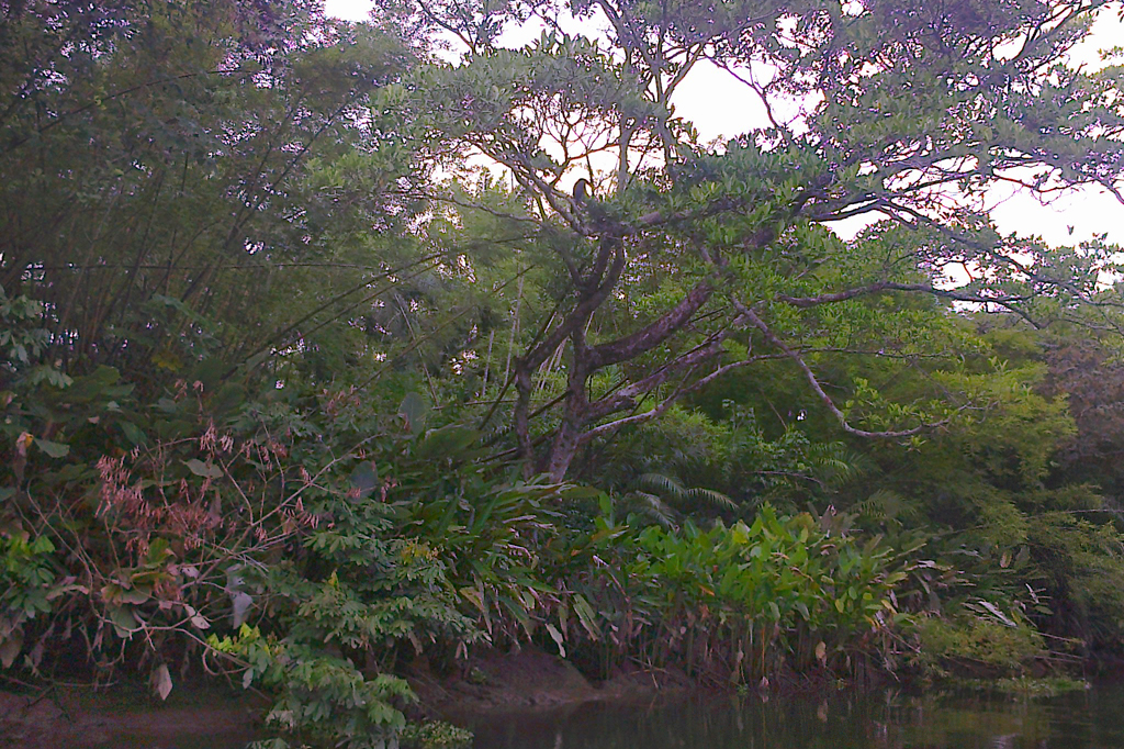 Sierpe – Mangroven mit Boot