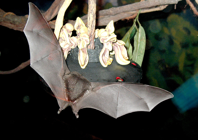 Bat Jungle Monteverde – (1)