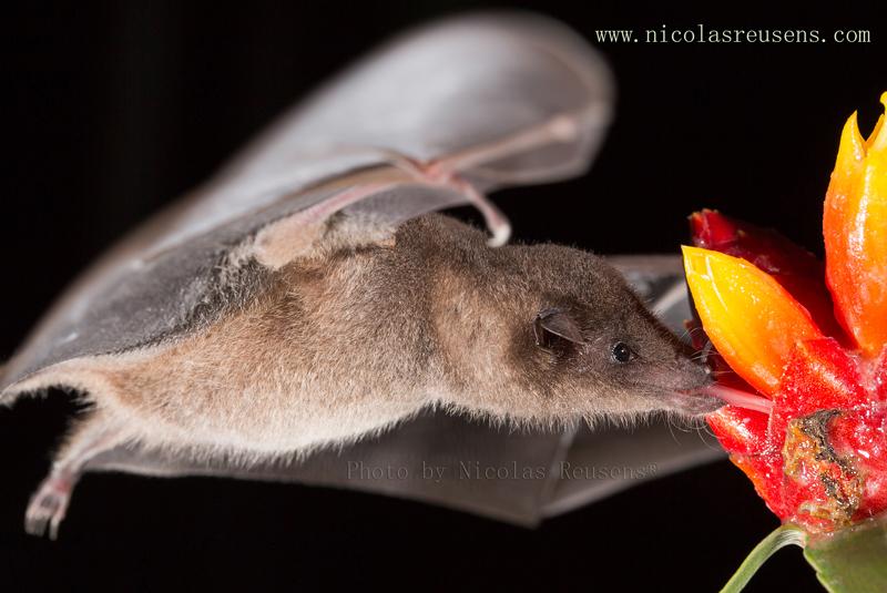 Bat Jungle Monteverde – (2)