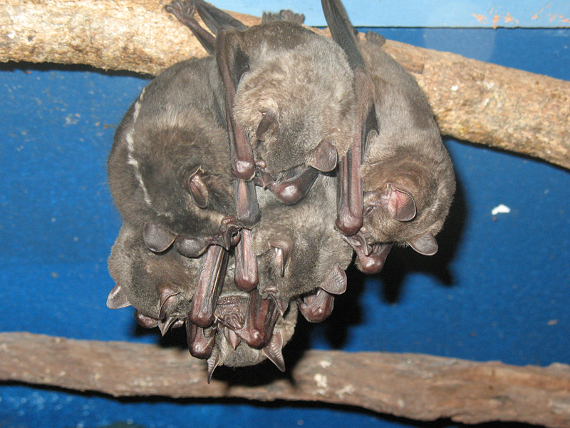 Bat Jungle Monteverde – (3)