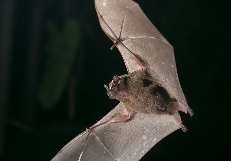 Bat Jungle – Monteverde