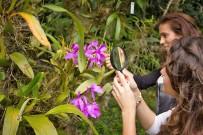Orchideen Garten - Monteverde (1)