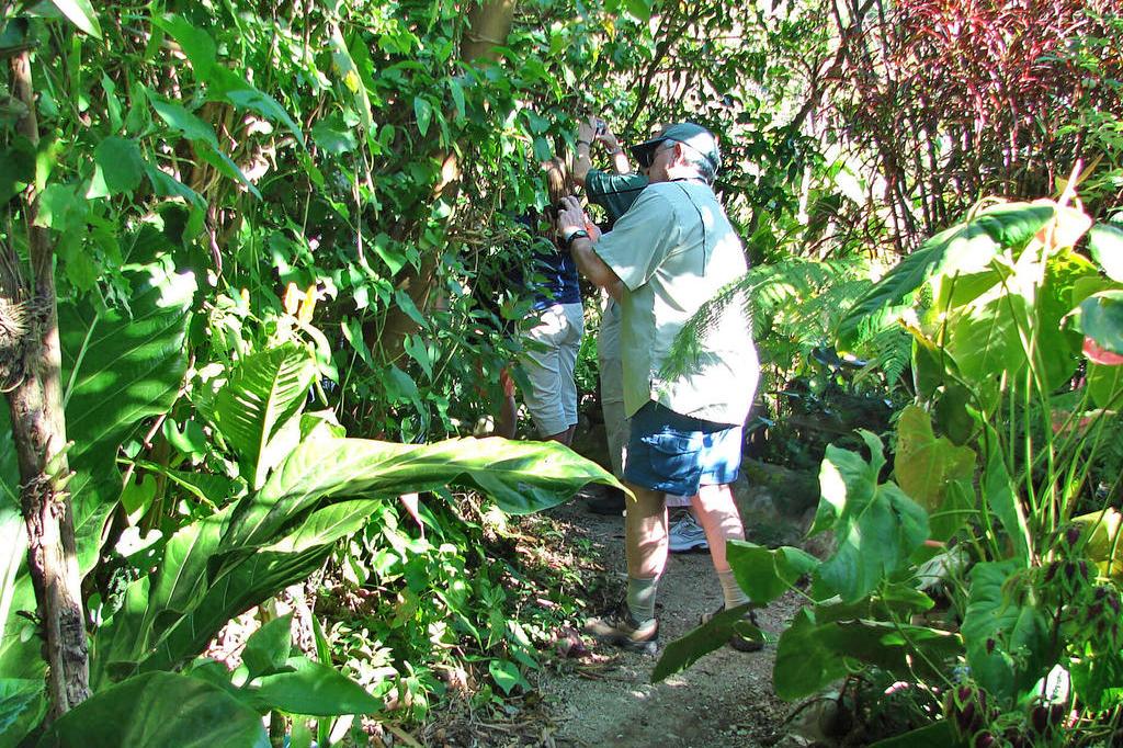 Orchideen Garten – Monteverde (3)