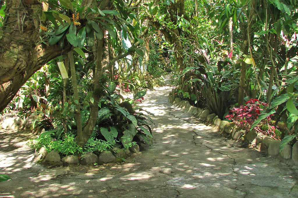 Orchideen Garten – Monteverde (4)