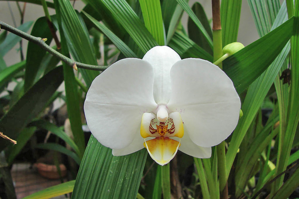 Orchideen Garten – Monteverde (6)