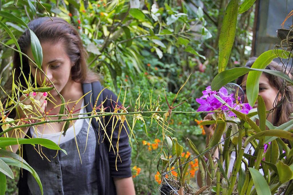Orchideen Garten – Monteverde