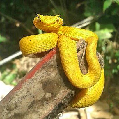 Regenwald der Kinder Monteverde – Schlange