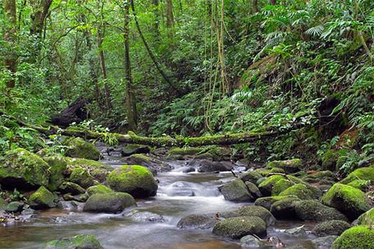 Santa Elena Reservat – Monteverde Fluss