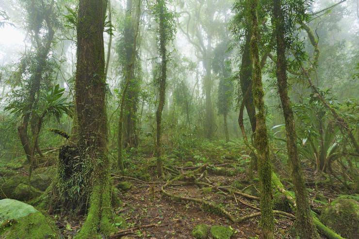 Santa Elena Reservat – Monteverde Nebelwald